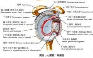 ぎっくり腰専門スマイルLABO/肩関節周囲炎